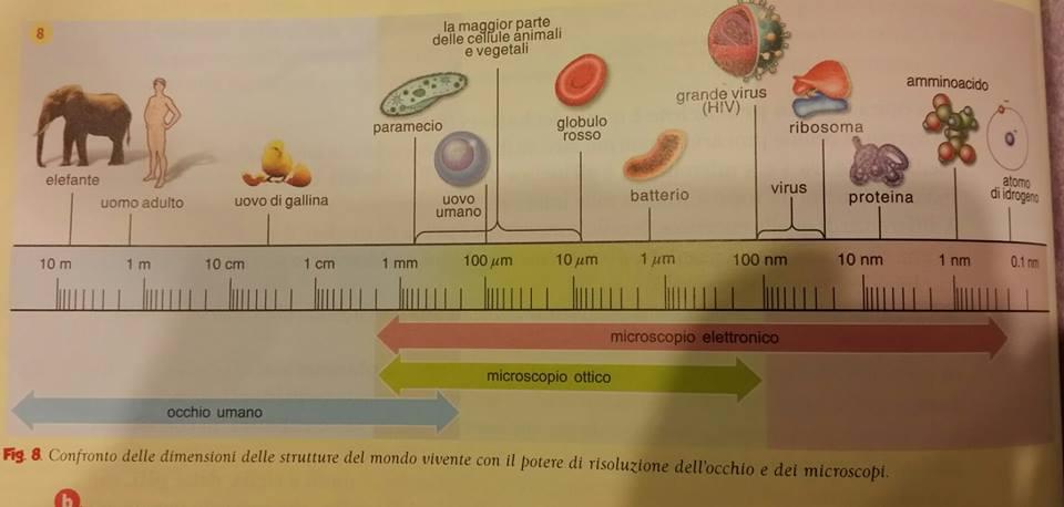 Potere di risoluzione occhio e Microscopi