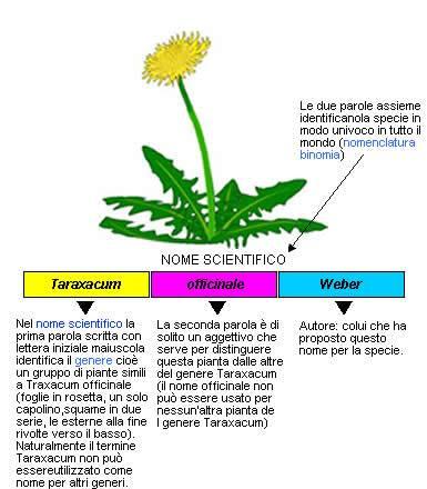 nomenclatura binomia es