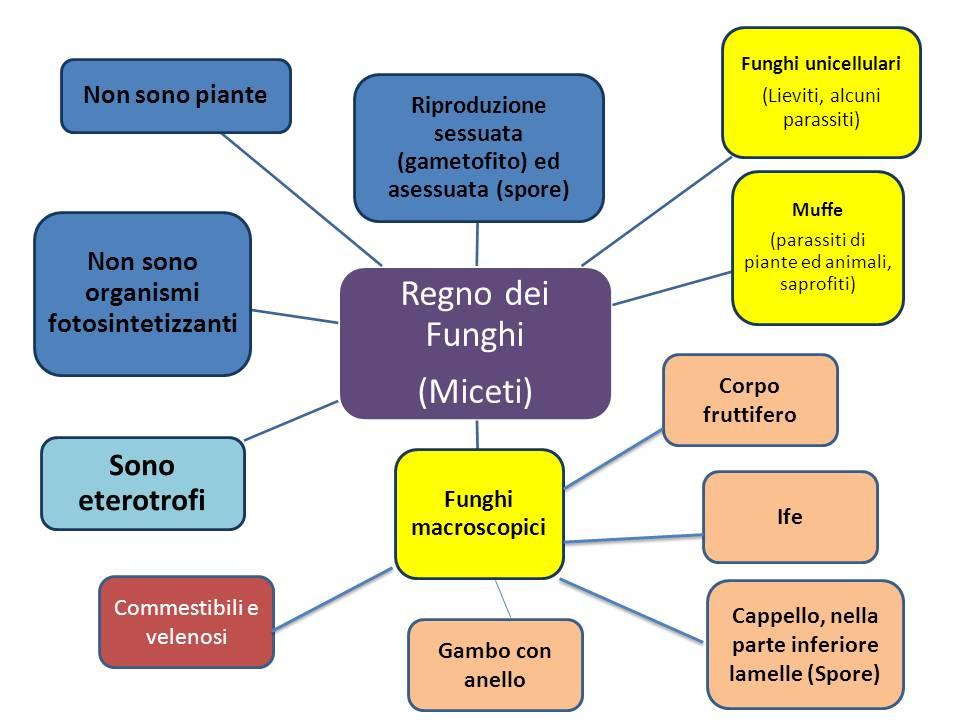 Mappa Funghi
