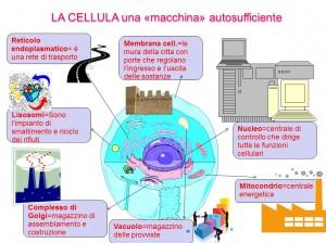 cellula macchina autosufficiente