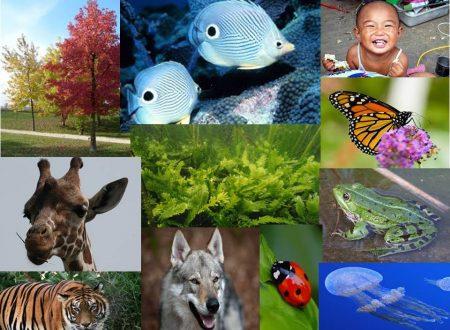 Classificazione dei viventi