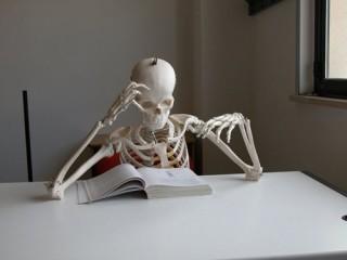 studiare-scheletro