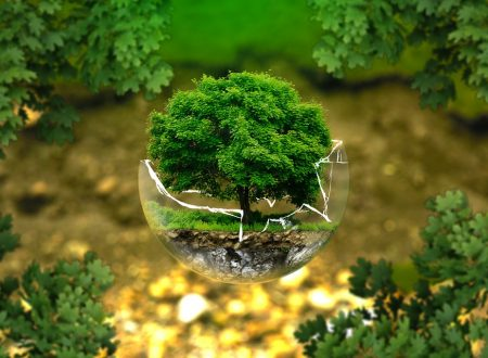 Ecologia: conoscere per preservare il pianeta Terra